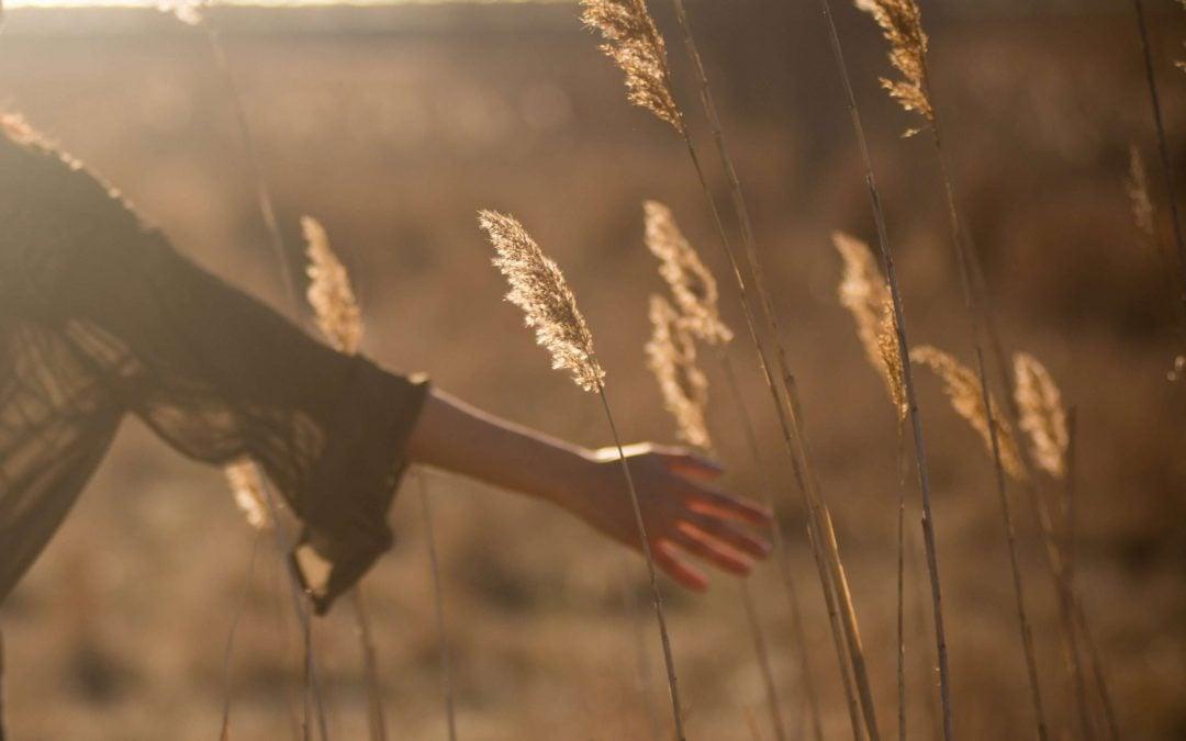 Særlig sensitive reagerer meget følsomt – både på det svære og det gode
